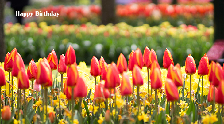 happy birthday wishes, birthday cards, birthday card pictures, famous birthdays, tulips, tulip fields, red, yellow, flowers