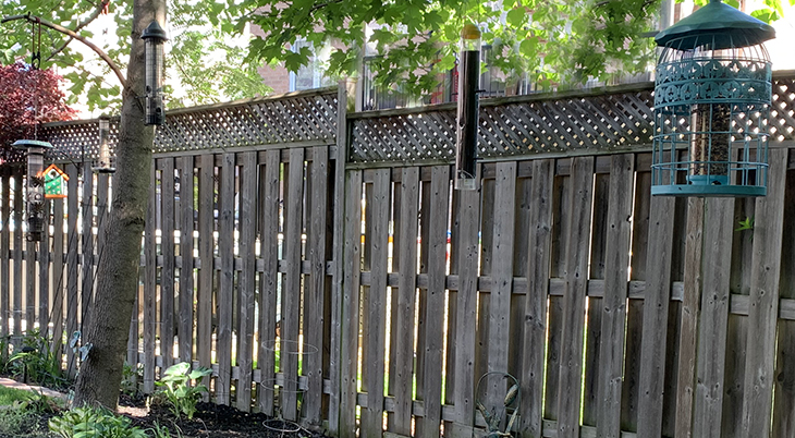 wild birds, types of bird feeders, squirrel buster bird feeder, caged tube bird feeders, nyjer feeders,
