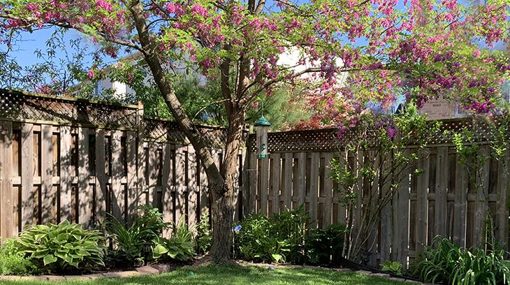 wild birds, bird feeders, idaho red locust, flowering trees, ontario