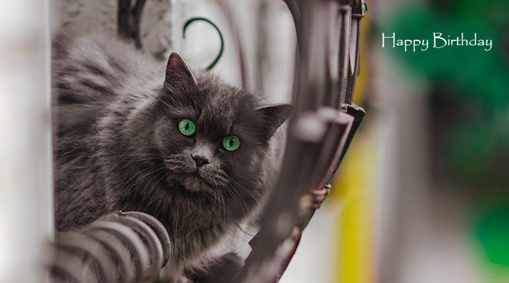 happy birthday wishes, birthday cards, birthday card pictures, famous birthdays, cat, animal, windowsill