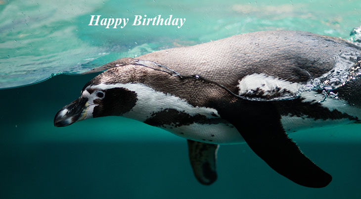 happy birthday wishes, birthday cards, birthday card pictures, famous birthdays, penguin, sea mammal,