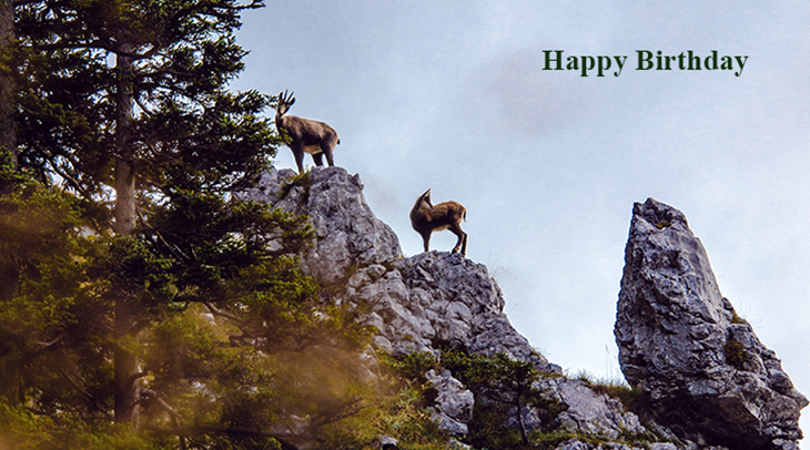 happy birthday wishes, birthday cards, birthday card pictures, famous birthdays, wild animals, austria, chamois, goats, antelope, deer, horns