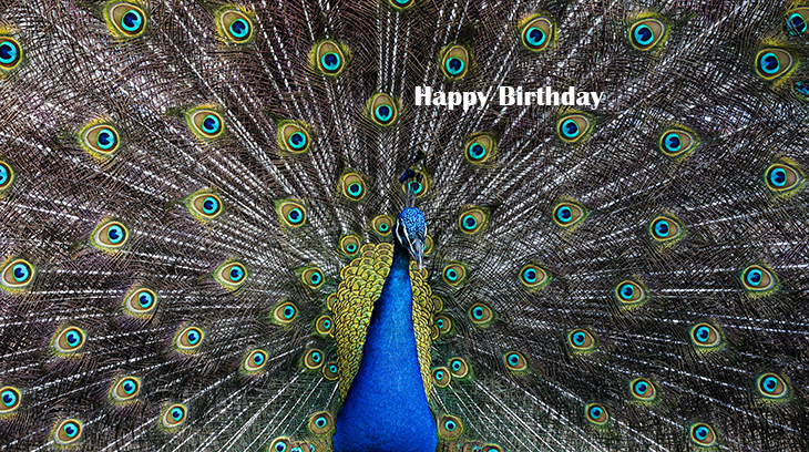 happy birthday wishes, birthday cards, birthday card pictures, famous birthdays, bird, peacock, blue