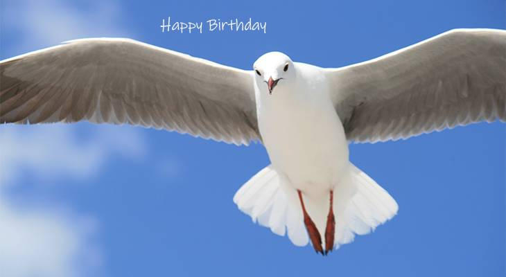 happy birthday wishes, birthday cards, birthday card pictures, famous birthdays, white bird, seagull, blue sky, clouds