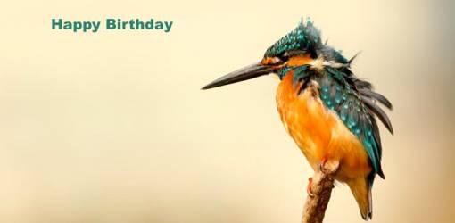 happy birthday wishes, birthday cards, birthday card pictures, famous birthdays, woodpecker, wild birds, yellow, orange, blue