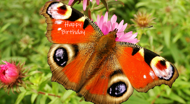 happy birthday wishes, birthday cards, birthday card pictures, famous birthdays, orange, butterfly