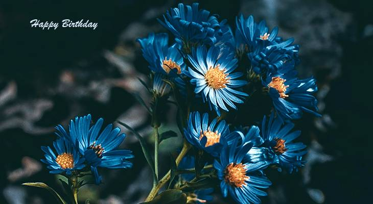 happy birthday wishes, birthday cards, birthday card pictures, famous birthdays, blue, flowers, daisy