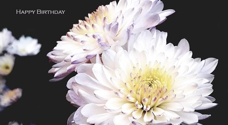 happy birthday wishes, birthday cards, birthday card pictures, famous birthdays, white, flowers, dahlia