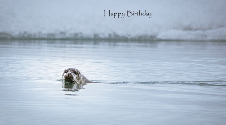 happy birthday wishes, birthday cards, birthday card pictures, famous birthdays, seal, wild animal, iceland, jokullsarlon, lake, nature, scenery