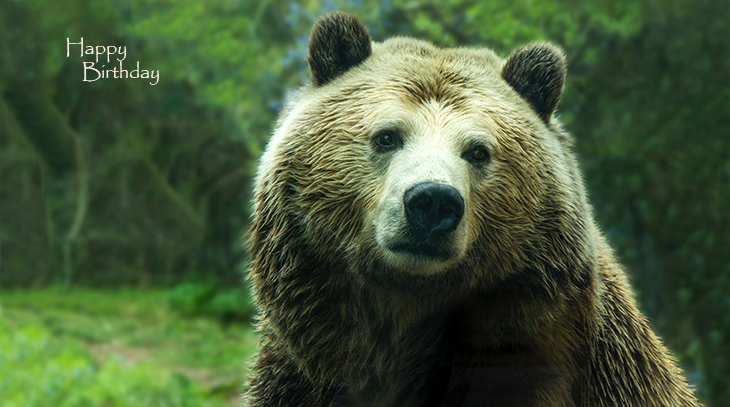 happy birthday wishes, birthday cards, birthday card pictures, famous birthdays, brown bear, grizzly bear, wild animals