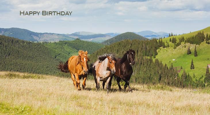 happy birthday wishes, birthday cards, birthday card pictures, famous birthdays, horses, rodna mountains, romania, animals