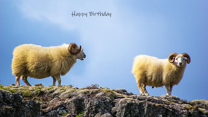 happy birthday wishes, birthday cards, birthday card pictures, famous birthdays, sheep, wild animals, thingvellir, iceland