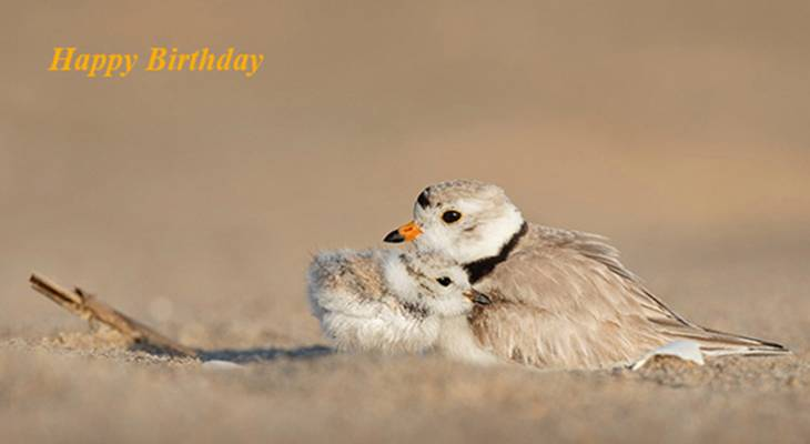 happy birthday wishes, birthday cards, birthday card pictures, famous birthdays, sand, brown birds, mother, baby bird, chick