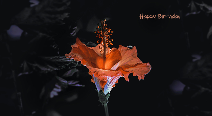 happy birthday wishes, birthday cards, birthday card pictures, famous birthdays, orange, flower, lily