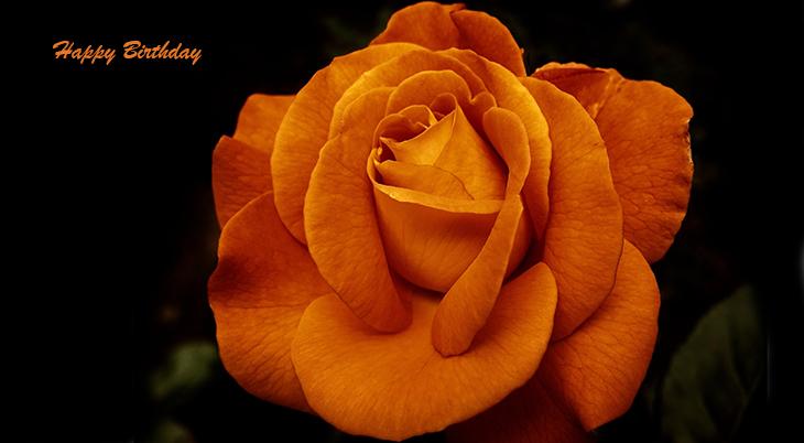 happy birthday wishes, birthday cards, birthday card pictures, famous birthdays, orange, rose, flower