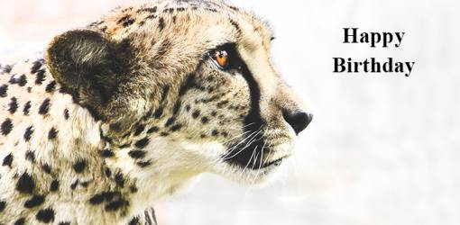 happy birthday wishes, birthday cards, birthday card pictures, famous birthdays, cheetah, big cats, african animals, wild animal