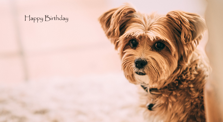 happy birthday wishes, birthday cards, birthday card pictures, famous birthdays, small dog, puppy, baby animals,