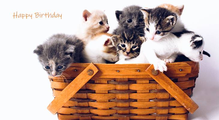 happy birthday wishes, birthday cards, birthday card pictures, famous birthdays, basket, kittens, baby animals, cats