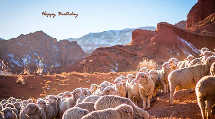 happy birthday wishes, birthday cards, birthday card pictures, famous birthdays, sheep, animals, gebiet tschui, krygyzstan
