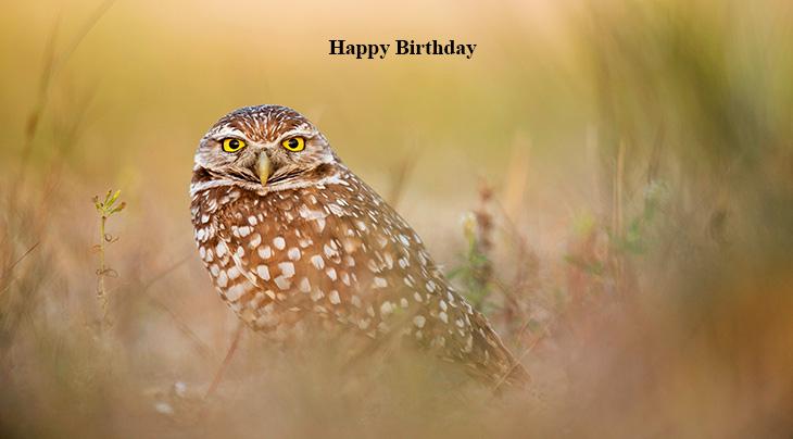 happy birthday wishes, birthday cards, birthday card pictures, famous birthdays, yellow, owl, wild bird,