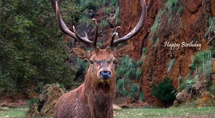 happy birthday wishes, birthday cards, birthday card pictures, famous birthdays, buck, deer, wild animal, antlers, spain, cabarceno