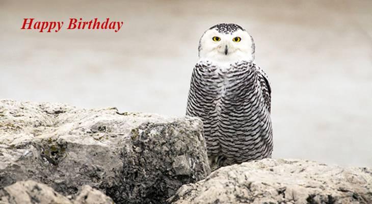 happy birthday wishes, birthday cards, birthday card pictures, famous birthdays, snowy owl, white bird, wild birds, oregon, maumee bay state park