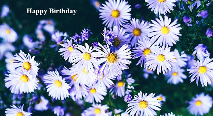 happy birthday wishes, birthday cards, birthday card pictures, famous birthdays, purple flowers, asters