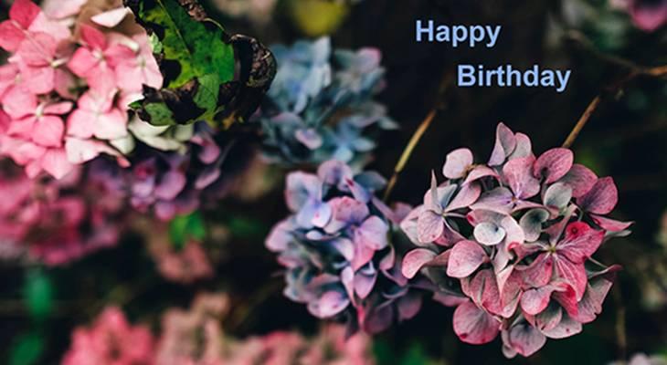 happy birthday wishes, birthday cards, birthday card pictures, famous birthdays, hydrangeas, pink flowers, blue, purple