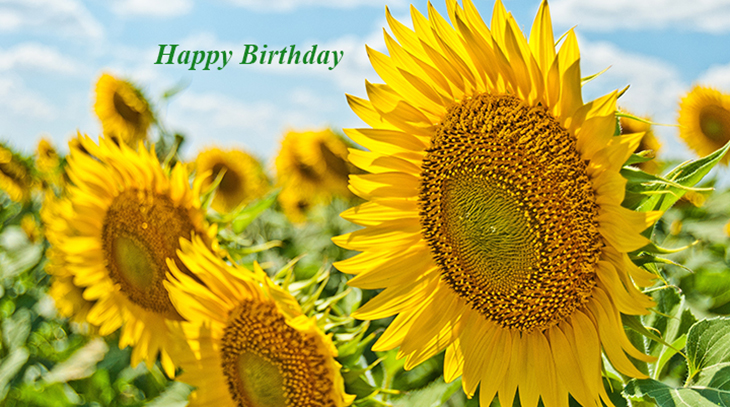happy birthday wishes, birthday cards, birthday card pictures, famous birthdays, sunflowers, yellow flower, blue sky
