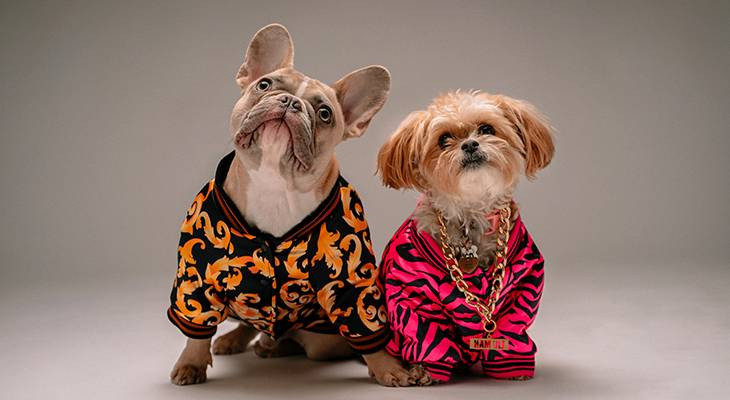 dogs, pets, clothes, dressing, clothing, costumes, bulldog, shih tzu, animals, funny
