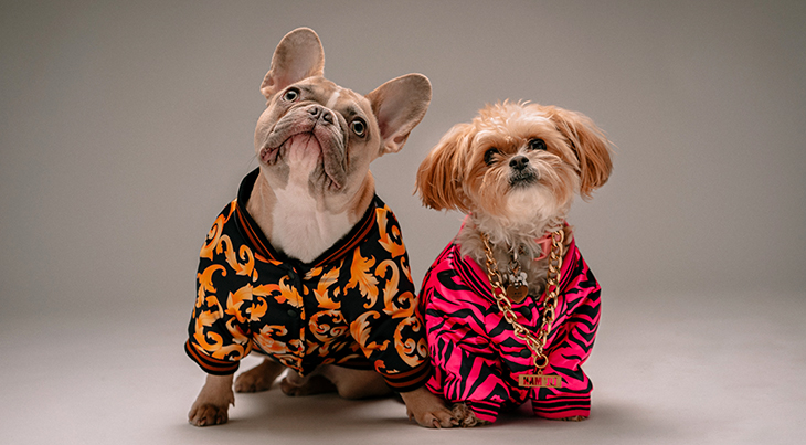 dogs, pets, clothes, dressing, clothing, costumes, bulldog, shih tzu, animals, funny