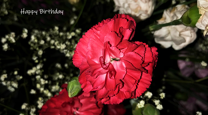 happy birthday wishes, birthday cards, birthday card pictures, famous birthdays, carnation, red flowers, white, babys breath