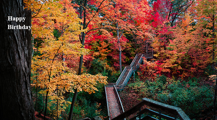 happy birthday wishes, birthday cards, birthday card pictures, famous birthdays, nature scenery, fall leaves, autumn colours, colorful trees, forest