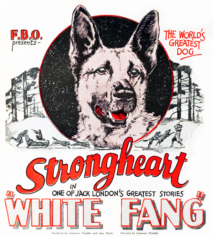 strongheart, 1925, movie dog, silent films, german shepherd, police dog, ldirector, aurence trimble, movie poster, animal actors, silent movie stars, producer, jane murfin