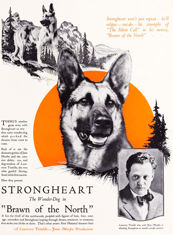 strongheart, 1922, movie dog, silent films, german shepherd, police dog, laurence trimble movies, brawn of the north, movie poster, animal actors, silent movie stars, irene rich, lee shumway
