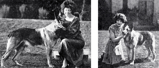 strongheart, 1925, movie dog, silent films, german shepherd, police dog, animal actors, silent movie stars, mrs jack london, author, childrens books, adventure novels, white fang, american actress, evelyn brent