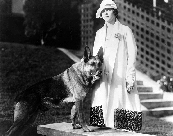 strongheart, 1922, movie dog, silent films, german shepherd, police dog, laurence trimble trainer, owner jane murfin, american writer, silent movies, scenarios, screenwriter, the silent call, brawn of the north