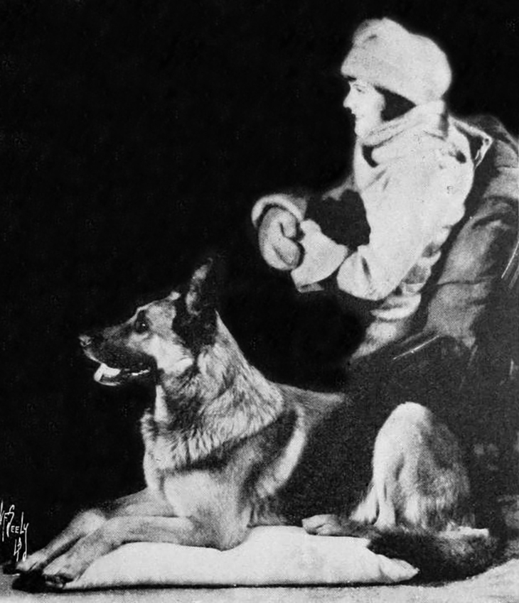 strongheart, 1924, movie dog, silent films, german shepherd, police dog, laurence trimble movies, the love master, animal actors, silent movie stars, lillian rich, american actress