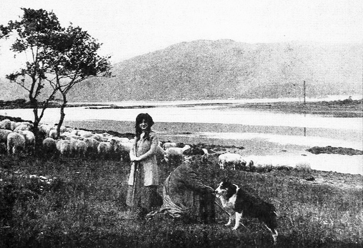 jean the dog, the vitagraph dog, rough collie, silent movies, dog film stars, silent films, actors, american actress, movie star, florence turner, turner film company, turner films, 1914 movie, the shepherd lassie of argyle