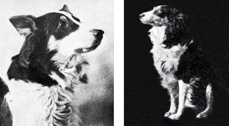 jean the dog, the vitagraph dog, rough collie, silent movies, dog film stars, silent films, actors, american actress, movie star, florence turner, turner film company, turner films, 1912, 1913, movies, jeans evidence, jean and the calico doll,