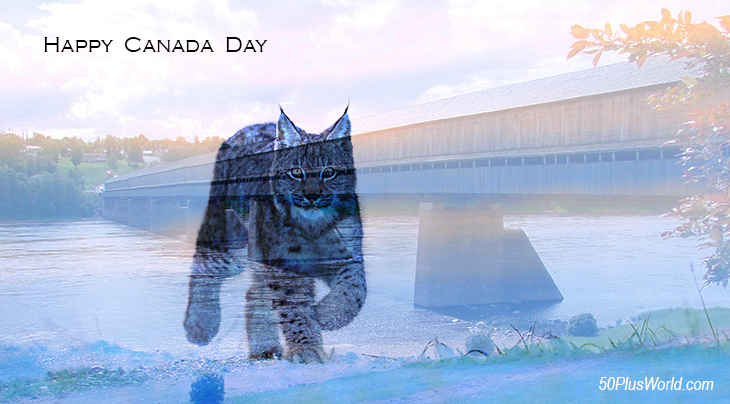 canada day, dominion day, canadian, provinces, flora, fauna, nature, scenery, wildlife, maritimes, atlantic canada, eastern canada, east coast, new brunswick, hartland nb, covered bridge, lynx